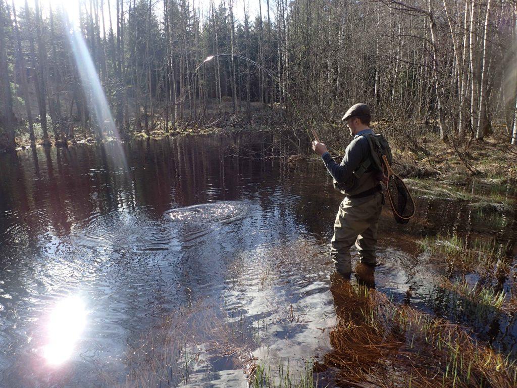 Johan krokar eftermiddagens andra fina öring Foto: Niklas Dahlin